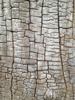 texture thumbnail